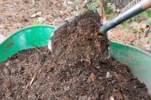 well rotted compost for mulching