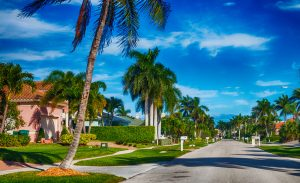 Beautiful palm trees in a street in Florida.