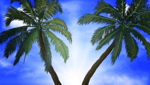 two palm trees against blue sky