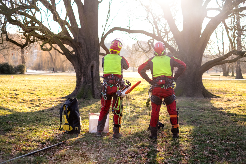 Two arborists assessing tree work