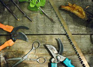 Set of summer garden tools