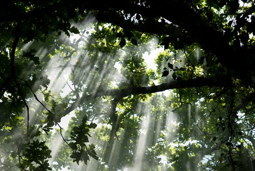 Light and shade filtering through a tree