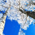 Tree Crowns in Wintertime